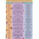 FICHA TABLA DE BIODESCODIFICACION EMOCIONAL (29,5 x 21 cm) REF 4756